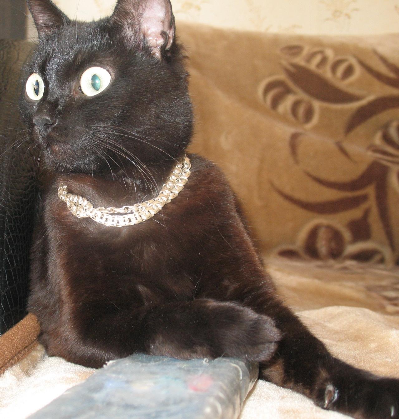 Кошка в возрасте около 2 лет