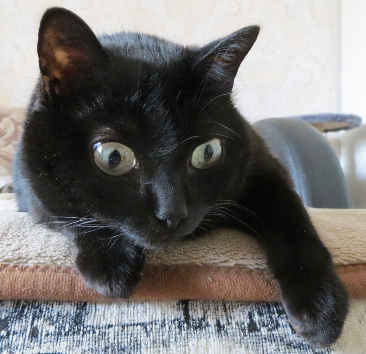 Кошка в возрасте около 8 лет
